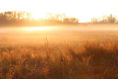 Fotografia da natureza de uma elevação adiantada de Sun sobre um campo de exploração agrícola com névoa pesada imagens de stock