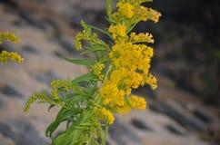 fotografia da natureza Flor Imagens de Stock