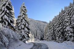 Fotografia da paisagem da floresta do abeto, inverno da neve foto de stock