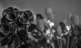 Fotografia das rosas em preto e branco Fotografia de Stock Royalty Free