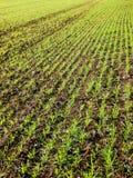 Fotografia de cor do campo verde Fotografia de Stock