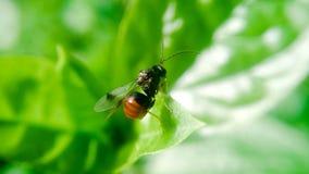Fotografia del micro di Butteful Immagini Stock