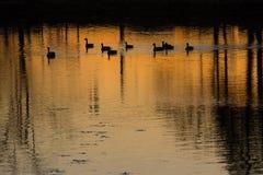 Fotografia del paesaggio dello scenics- della natura Fotografie Stock