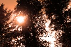 Fotografia del sole in alberi Immagini Stock Libere da Diritti