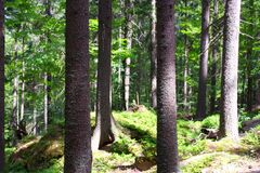Fotografia della foresta europea Fotografie Stock Libere da Diritti