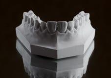Fotografia della mandibola più bassa su un fondo nero Immagini Stock