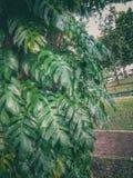 fotografia della natura fotografie stock