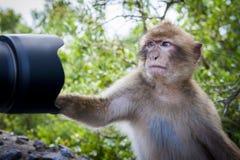 Fotografia della scimmia Fotografia Stock