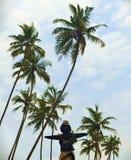 Fotografia dello spaventapasseri sul fondo della palma Immagini Stock