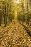 Foglie cadute su un percorso attraverso il legno Fotografia Stock