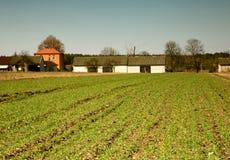 Fotografia di un campo del frumento autunnale a marzo, paesaggio Fotografia Stock Libera da Diritti