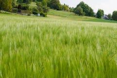 Fotografia do campo verde bonito Foto de Stock Royalty Free