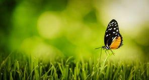 Fotografia do jardim da borboleta Fotos de Stock Royalty Free