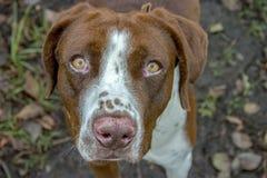 Fotografia do retrato de um cão do híbrido imagens de stock royalty free