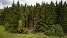 Fotografia do zangão da entrada natural à floresta imagem de stock royalty free