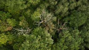 Fotografia do zangão de árvores inoperantes em uma floresta fotos de stock