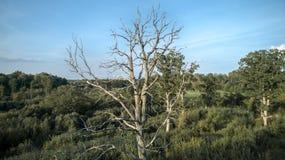 Fotografia do zangão de árvores inoperantes em uma floresta imagem de stock royalty free