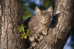 Fotografia dos animais selvagens imagens de stock royalty free