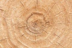 Fotografia drewniana tekstura rżnięty drzewny bagażnik Zakończenie zdjęcia stock