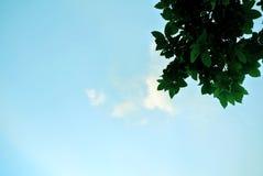 A fotografia exterior do céu e da árvore objeta no parque imagens de stock royalty free