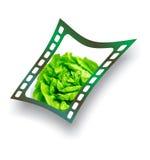 fotografia istantanea fresca dell'insalata della lattuga Fotografie Stock Libere da Diritti