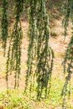 Fotografia jaskrawy czuły odgałęzienie drzewny dorośnięcie fotografia stock