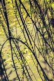 Fotografia jaskrawy czuły odgałęzienie drzewny dorośnięcie zdjęcia stock
