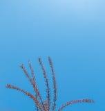 Fotografia jaskrawy czuły odgałęzienie drzewny dorośnięcie zdjęcie stock