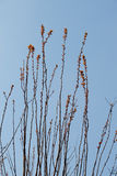 Fotografia jaskrawy czuły odgałęzienie drzewny dorośnięcie obraz stock