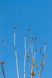 Fotografia jaskrawy czuły odgałęzienie drzewny dorośnięcie Zdjęcia Royalty Free