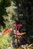 Fotografia jaskrawy czuły odgałęzienie drzewny dorośnięcie Zdjęcie Royalty Free