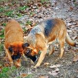 fotografia kilka psów ruchliwie głębienie obraz stock