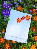 Fotografia kwiatów ogródu Ramowy lato Zdjęcie Stock