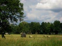 Fotografia lato krajobraz z żniwiarzami na polu, zbierackich trawa ścinkach, rolkach i zielonej roślinności, Zdjęcie Royalty Free