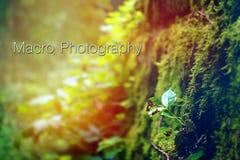 Fotografia macro da natureza com palavras da tipografia nas madeiras ao lado da planta verde emergente pequena imagem de stock