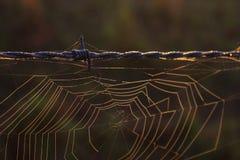 Fotografia macro da natureza de Spiderweb de uma Web de aranha em um arame farpado fotografia de stock royalty free
