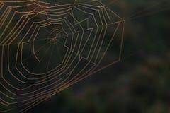 Fotografia macro da natureza de uma Web de aranha natural imagens de stock