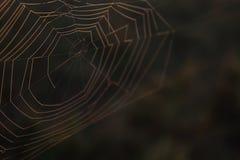 Fotografia macro da natureza da Web de aranha de uma rede nas madeiras fotos de stock