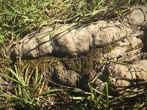 Fotografia macro da raiz da árvore da terra, da grama e do musgo Fotografia de Stock
