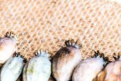 Fotografia macro das cabeças da papoila e das sementes de papoila Fotos de Stock Royalty Free