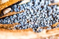 Fotografia macro das cabeças da papoila e das sementes de papoila Fotografia de Stock Royalty Free