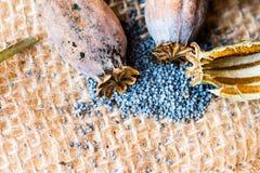 Fotografia macro das cabeças da papoila e das sementes de papoila Fotografia de Stock