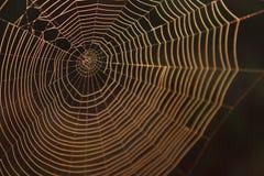 Fotografia macro de uma textura do fundo da Web de aranha imagens de stock royalty free
