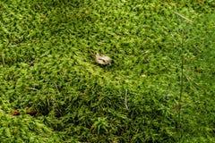 Fotografia mech w lesie zdjęcie royalty free