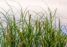 Fotografia natura wokoło pięknego błękitnego jeziora Zdjęcia Royalty Free