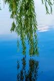 Fotografia natura wokoło pięknego błękitnego jeziora Obraz Stock