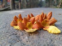 a fotografia natural da flor da beleza para todas as rosas do lírio leu o amarelo cor-de-rosa para o céu especial com rosa natura Imagens de Stock