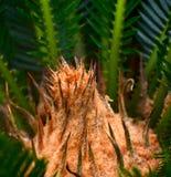 Fotografia natural do fundo das plantas Imagens de Stock