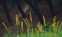 Fotografia natural do fundo das plantas Imagens de Stock Royalty Free