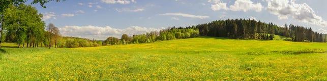 Fotografia panorâmico do campo do dente-de-leão com floresta b do pinheiro fotos de stock royalty free